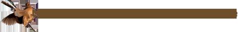 Setters anglais du pays de Vassivière logo